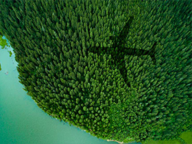 Shadow of plane over forest